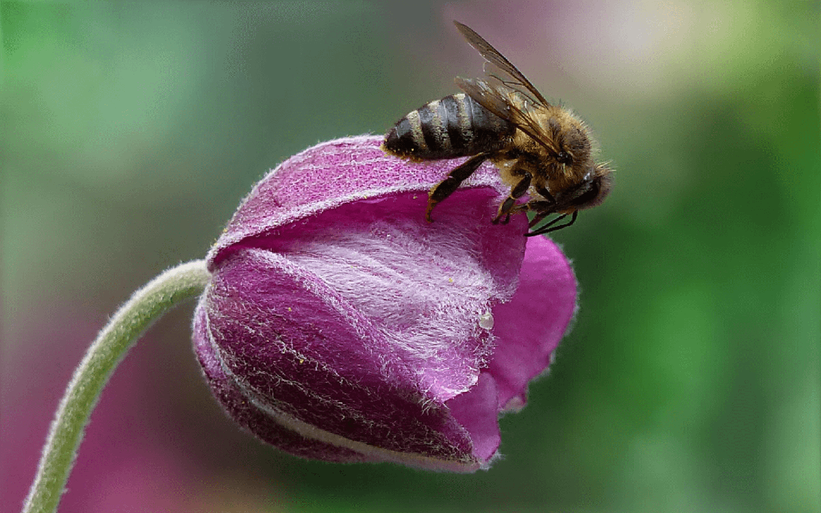 Is The-Social-Honey-Bee