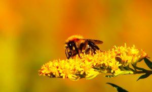 The-Social-Honey-Bee