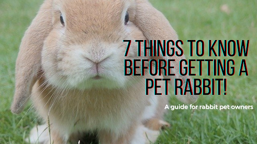 7 Things To Know Before Getting a PetRabbit