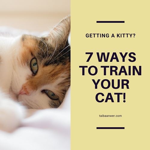 How to Train Cats At Home! – 7 Tried and Tested Ways