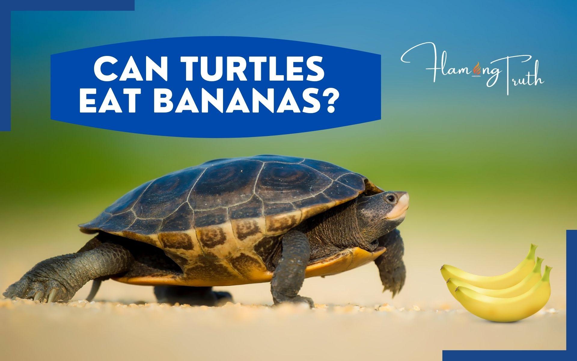 can-turtles-eat-bananas