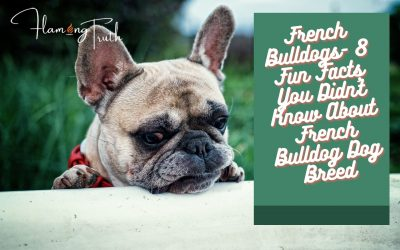 French Bulldogs- 8 Fun Facts You Didn't Know About French Bulldog Dog Breed